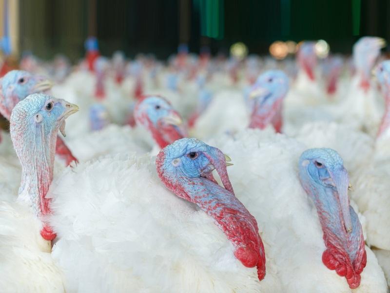 Для животноводческих промышленных комплексов и ферм