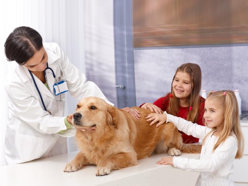 Для ветеринарних клінік та аптек